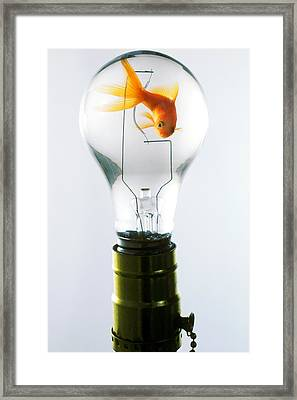 Goldfish In Light Bulb  Framed Print by Garry Gay