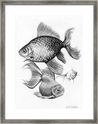 Goldfish Framed Print by Sarah Batalka
