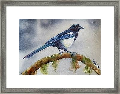 Goldigger Framed Print by Patricia Pushaw