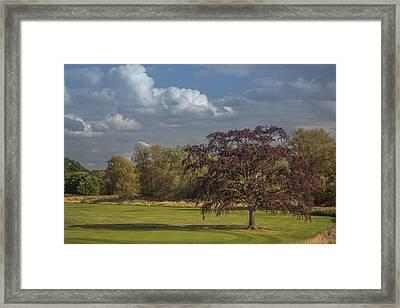 Golfing Hazard Framed Print by Chris Fletcher