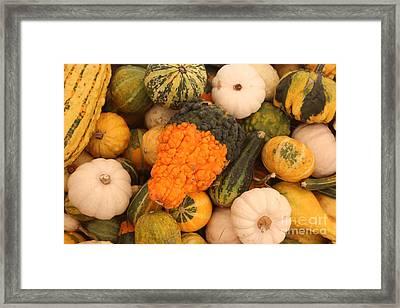 Good Gourd Framed Print by Robert Wilder Jr
