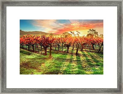 Good Morning Napa Framed Print by Jon Neidert