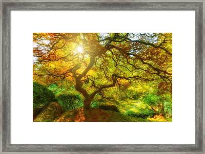 Good Morning Sunshine Framed Print by Darren  White