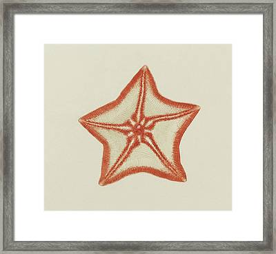 Goose Foot Starfish Framed Print by Philip Henry Gosse