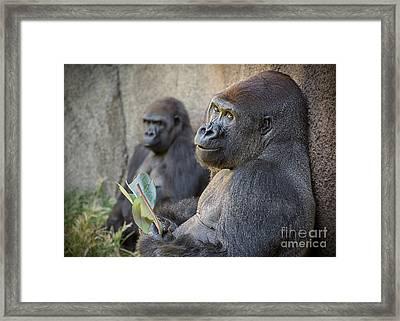 Gorilla Couple Framed Print by Jamie Pham