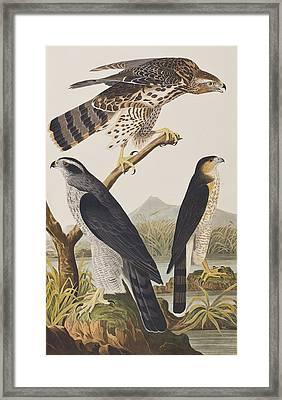 Goshawk And Stanley Hawk Framed Print by John James Audubon