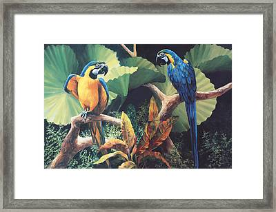 Gossips Framed Print by Laurie Hein