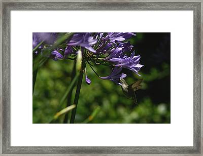 Got It Framed Print by David Armentrout