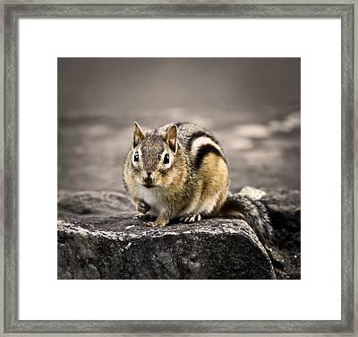Got Nuts Framed Print by Evelina Kremsdorf