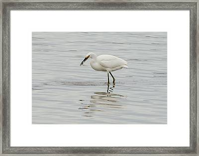 Gotcha Framed Print by Loree Johnson