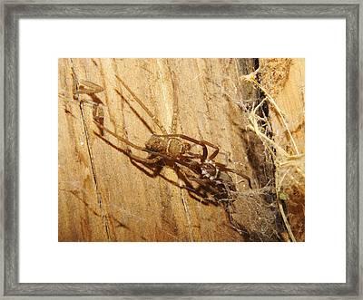 Gotcha Framed Print by Lynda Dawson-Youngclaus
