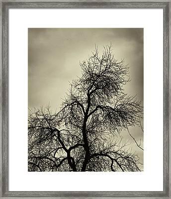 Gothic Tree Framed Print by Robert Ullmann