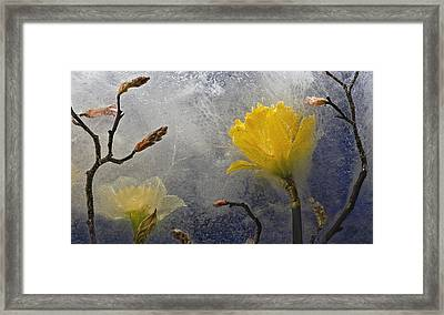 Earth To Heaven Framed Print by Carmen Moise