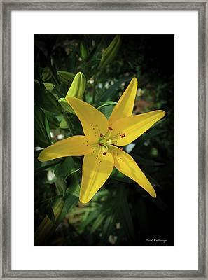 Grace Flowers Daylily Art Framed Print by Reid Callaway