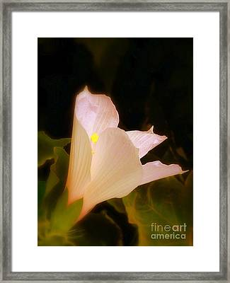 Grace Framed Print by Priscilla Richardson