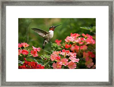 Graceful Garden Jewel Framed Print by Christina Rollo