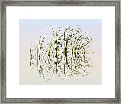 Graceful Grass Framed Print by Bill Kesler
