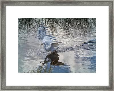 Graceful Snowie Framed Print by John Bailey
