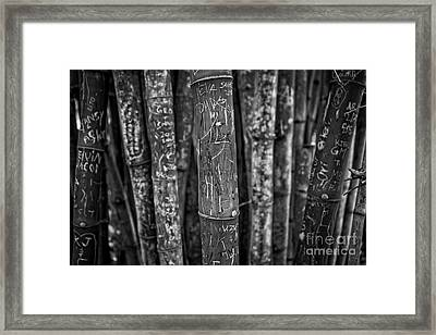 Graffiti Laden Bamboo Black And White Framed Print by Edward Fielding