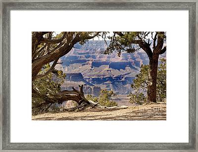 Grand Canyon Through The Trees Framed Print by Jane Rix