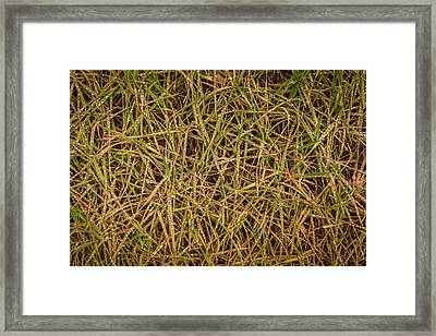Grand Falls Grass Framed Print by Jon Manjeot