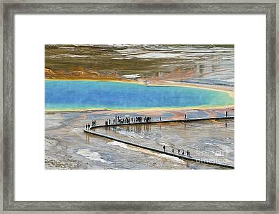 Grand Prismatic Spring Framed Print by Teresa Zieba