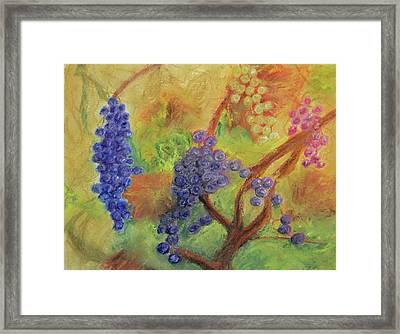 Grape Collage Framed Print by Ken Figurski