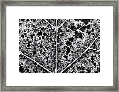Grape Leaf Monochrome Framed Print by Tim Gainey