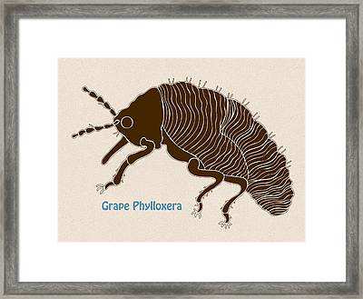 Grape Phylloxera Framed Print by Frank Tschakert