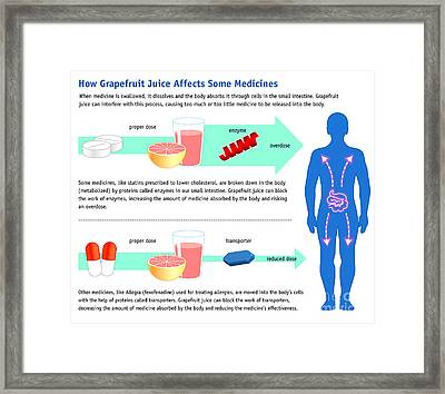 Grapefruit Juice And Medicine Warning Framed Print by Science Source