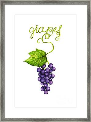 Grapes Framed Print by Cindy Garber Iverson