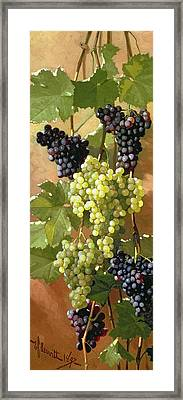 Grapes Framed Print by Edward Chalmers Leavitt