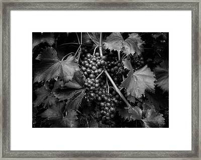 Grapes In Black And White Framed Print by Greg Mimbs