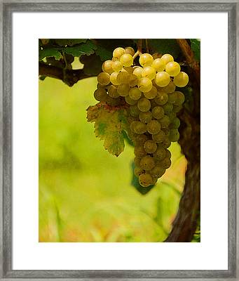 Grapes Framed Print by Travis Aston