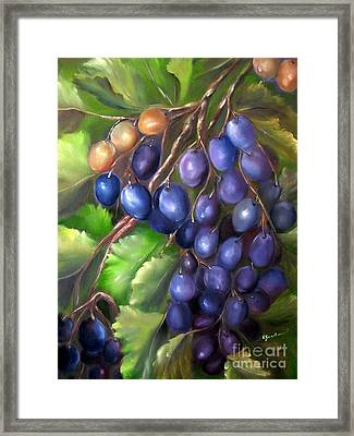 Grapevine Framed Print by Carol Sweetwood