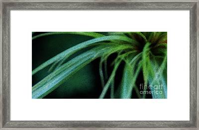 Grass Dance Framed Print by Linda Shafer