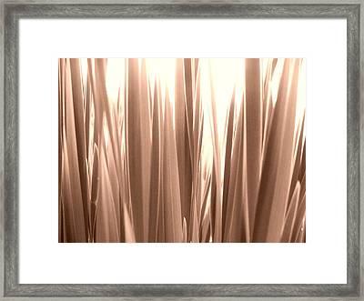 Grass Framed Print by Gonca Yengin