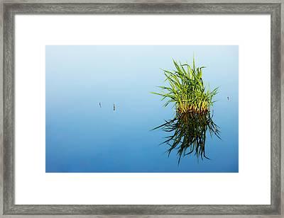 Grass In Blue Framed Print by Todd Klassy