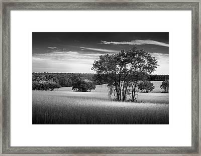 Grass Safari-bw Framed Print by Marvin Spates
