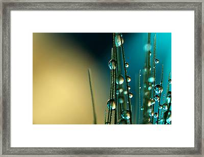 Grass Seed With Blue Framed Print by Sharon Johnstone
