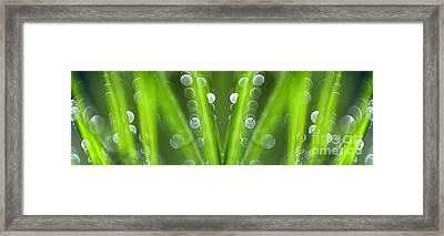 Grass Framed Print by Silke Magino