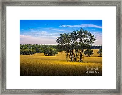 Grassland Safari Framed Print by Marvin Spates