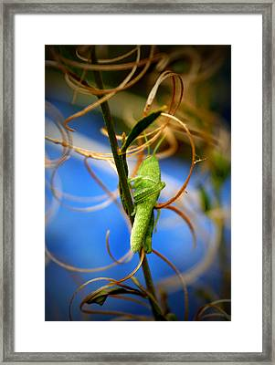 Grassy Hopper Framed Print by Chris Brannen
