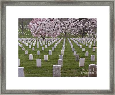 Graves Of Heros In Arlington National Cemetery Framed Print by Tim Grams