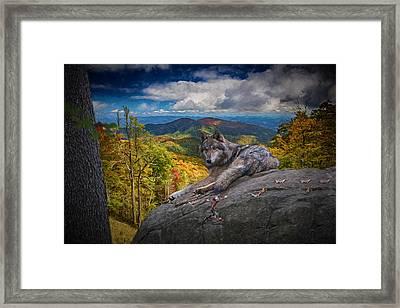 Gray Wolf In Autumn Framed Print by John Haldane