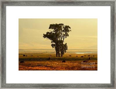 Grazing Around The Tree Framed Print by Adam Jewell