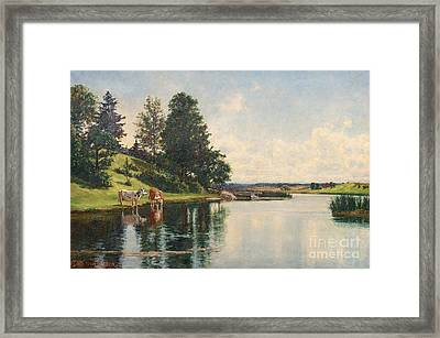 Grazing Cows Framed Print by Celestial Images