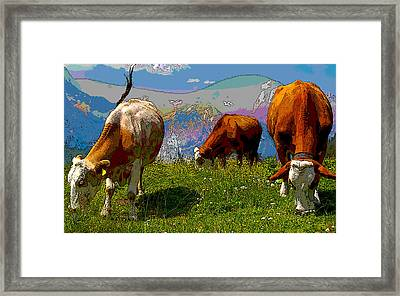 Grazing Cows Framed Print by Charles Shoup