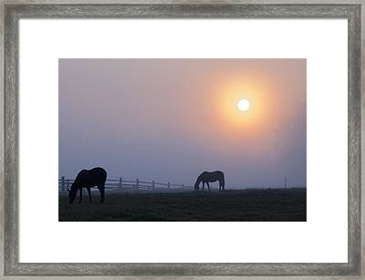Grazing In The Fog At Sunrise Framed Print by Bill Cannon