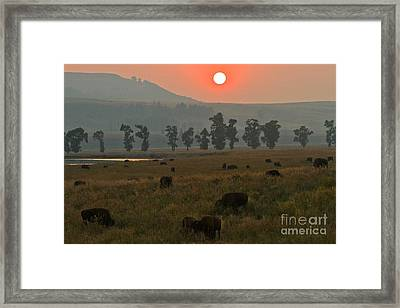 Grazing In The Smoke Framed Print by Adam Jewell